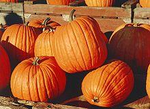220px-Pumpkins